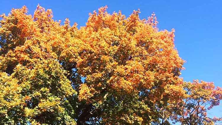 autumn blog feature 1