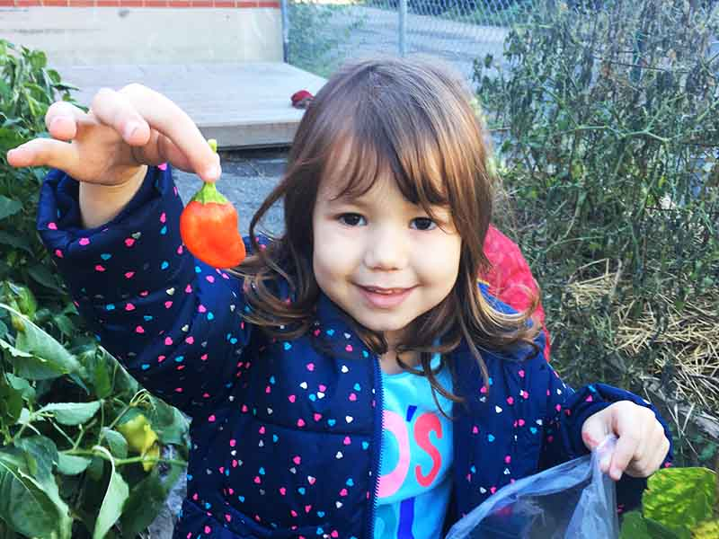 0 harvest party blog feature