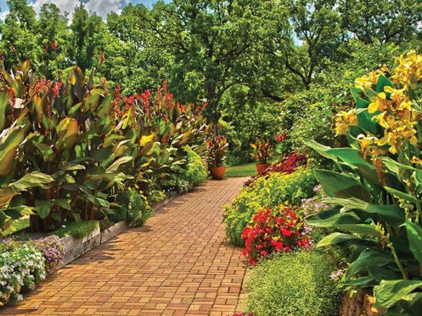 Beanstalk-Garden