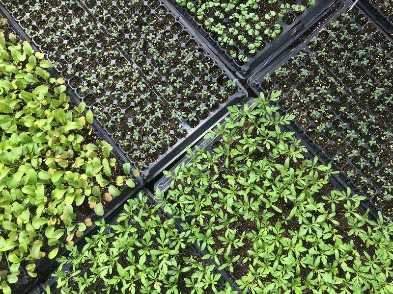 greenhouse_flats_800x600