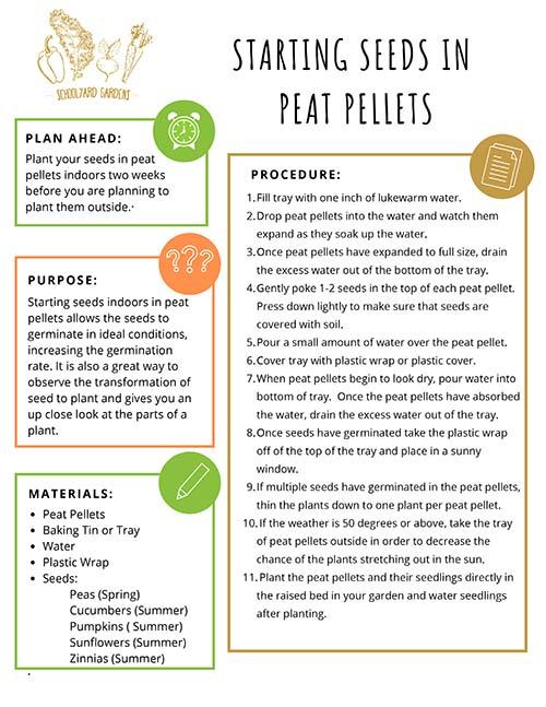Starting Seeds in Peat Pellets