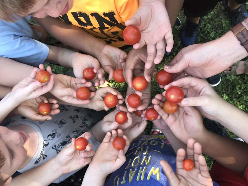 tomato_blog_7_800x600