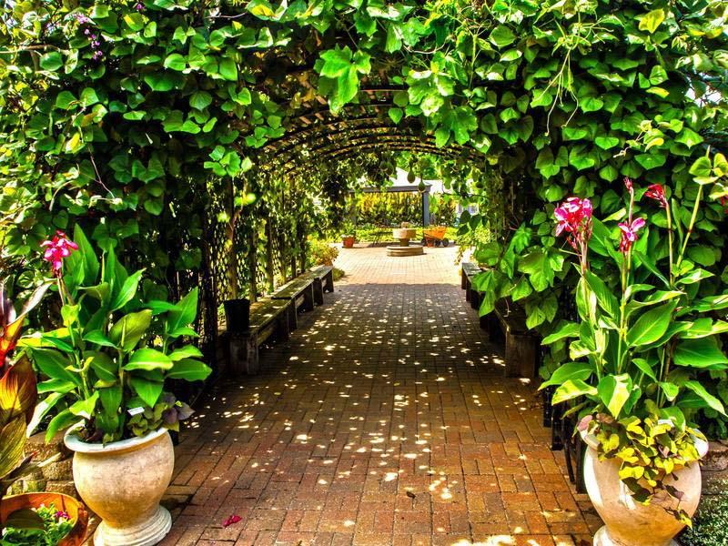 Beanstalk-Garden2_800x600