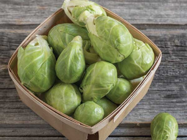 Brussel-Sprouts-Dagan