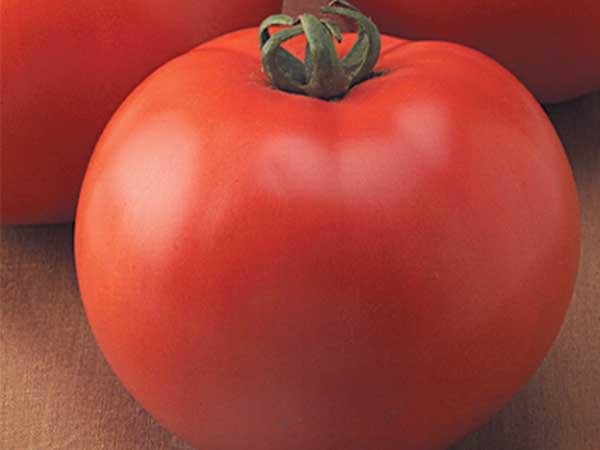 Goliath-Tomato