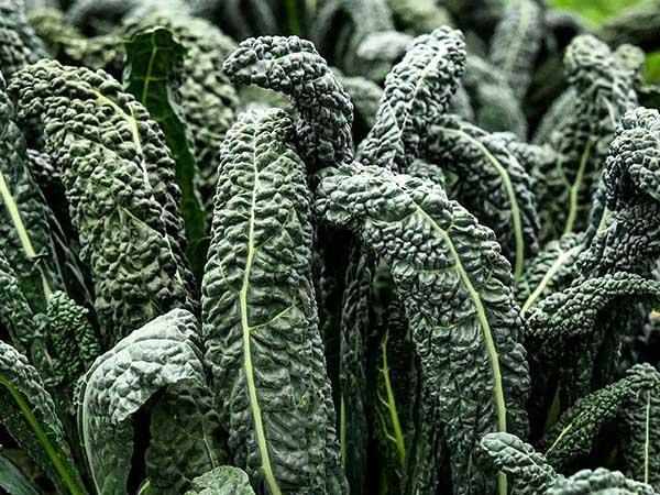 Kale-nero-di-toscana