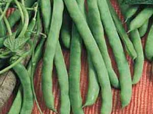 Kentucky-Wonder-Pole-Beans