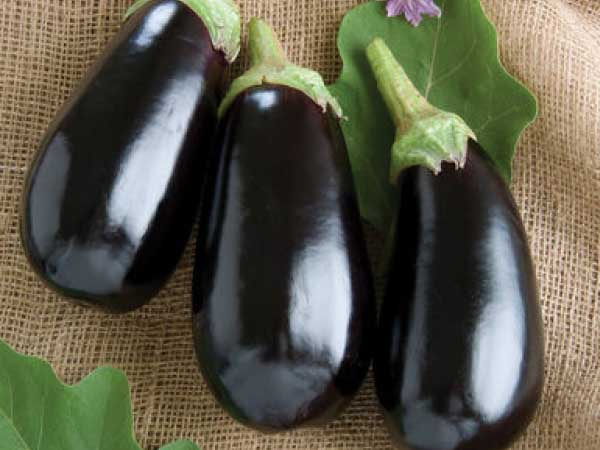 Nadia-Eggplant