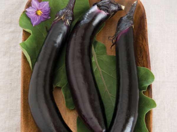 Orient-Express-Eggplant