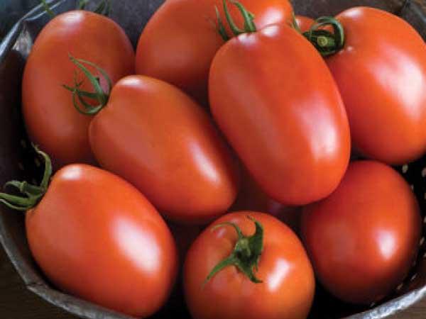 Plum Regal Tomato