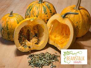 Pumpkin-Kakai