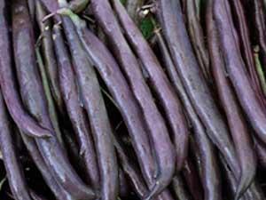 Royal-Burgundy-Bush-Bean