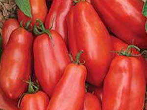 San-Marzano-Tomato