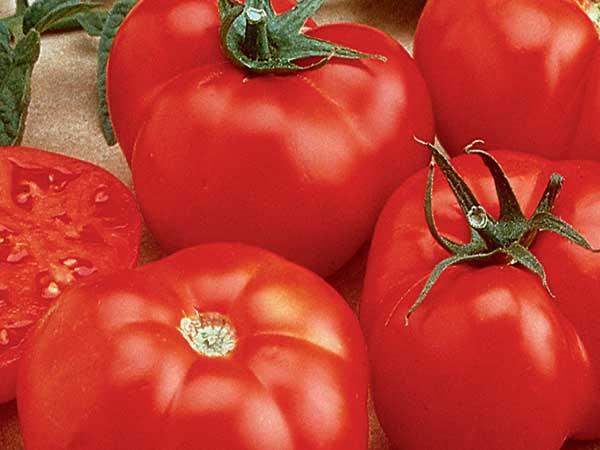 beefmaster-tomato