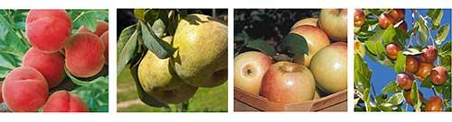 Fruit-Border-v2