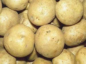 Kennebec-potato