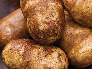 Norkotah-Potato