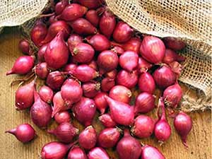 Red-Onion-Sets