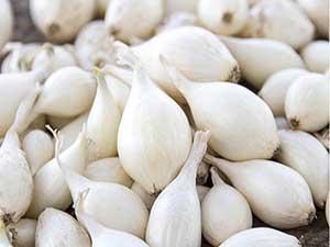 White-Onion-Sets