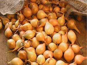 Yellow-Onion-Sets