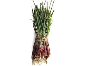 candy-apple-onion-plant
