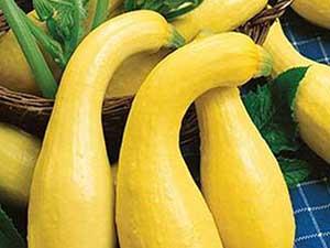 yellow-crookneck