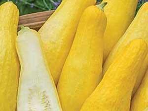 yellow-straightneck